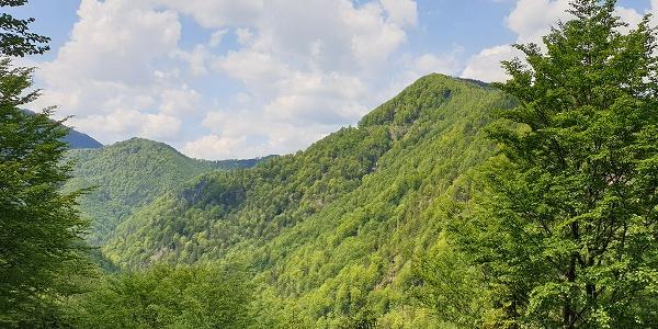 Im Tal des Holzes, Ausblick von Aussichtsplattform über´s Waldmeer © MiE