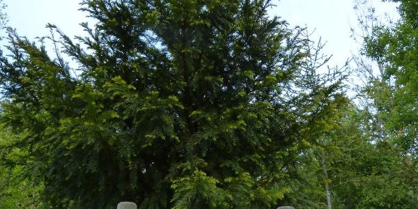 Allee Baum des Jahres