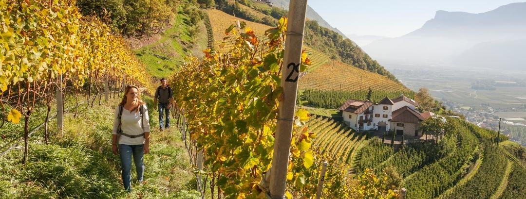 Retkeilyä viinipeltojen keskellä