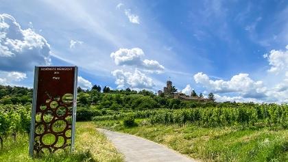 Schönste Weinsicht zur Wachtenburg