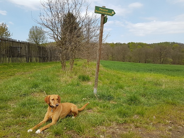 Urlaub mit Hund im Vogtland - Wandern