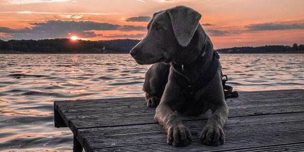 Urlaub mit Hund im Vogtland - Talsperre Pöhl