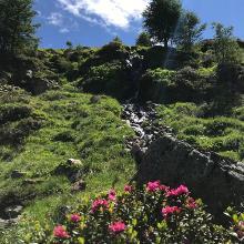 Zwischen Versingalm und Ascherhütte