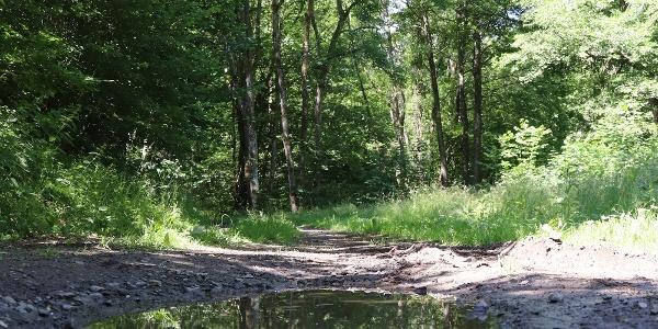 Wald bei Nitztal