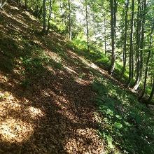 im Wald vorm Plattensteig, Wegspuren sind gut erkennbar