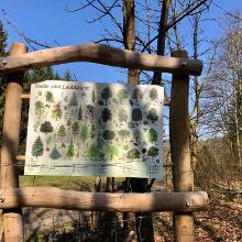 Schulwald in Wiederstein am Rundwanderweg