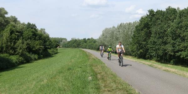 Tekerés a Tisza-tó gátján: hosszú szakaszokon erre a látványra kell készülni