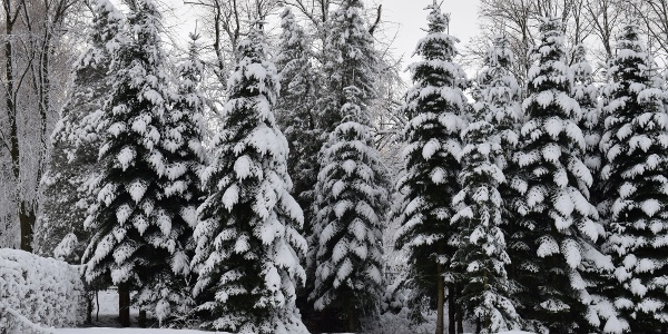 Winter Auerbach