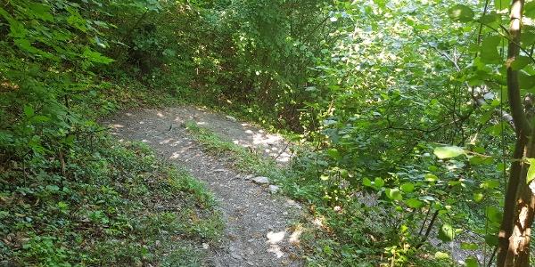 Zig Zag Trail - für Spitzkehren Liebhaber