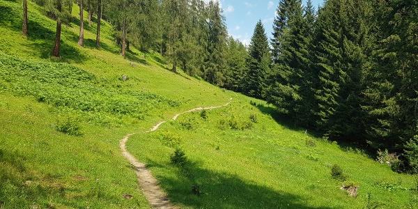 Wiesen-Trail unterhalb von Brambrüesch