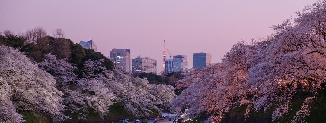 桜のある風景 千鳥ヶ淵緑道