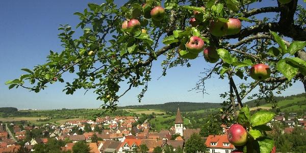 Gültlingen, mit Streuobst-Wiesen-Äpfeln