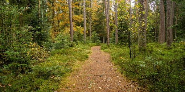 Schwarzwald-Weg beim Bulerwaldstern