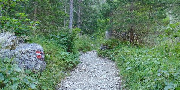 Beginn des Weges - zunächst noch gemütlich durch den Wald