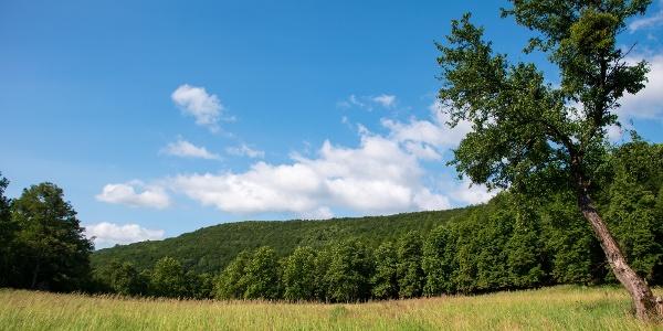 A Pasika-rét a Tokaji-hegységre jellemző, nyeregben ülő hegyi kaszáló
