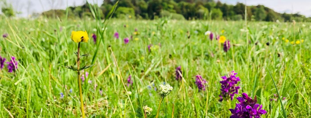 Blühende Orchideen