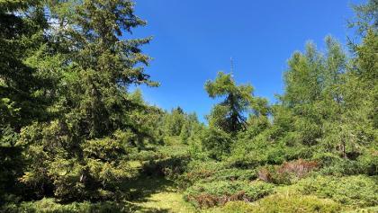 Waldbereich