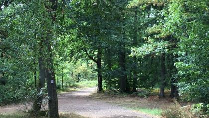 Viele schöne Waldpassagen