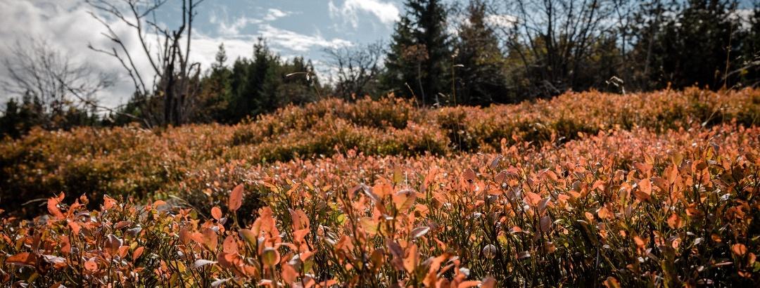 Herbst in der Urlaubsregion Altenberg