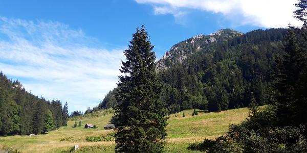Fuchsalm - im Hintergrund der Lahnerkogel