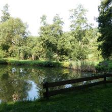 Fischweiher am Waldweg entlang dem Appelbach