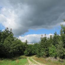 Wolkenspiel im Wald