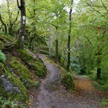 Tolle Waldwege