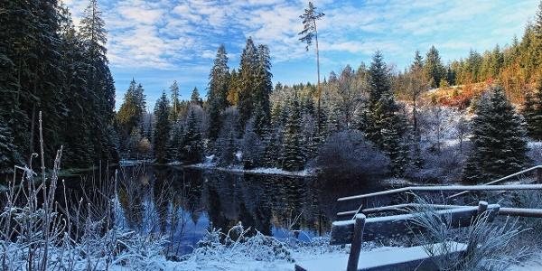 Kaltenbachsee im Winter