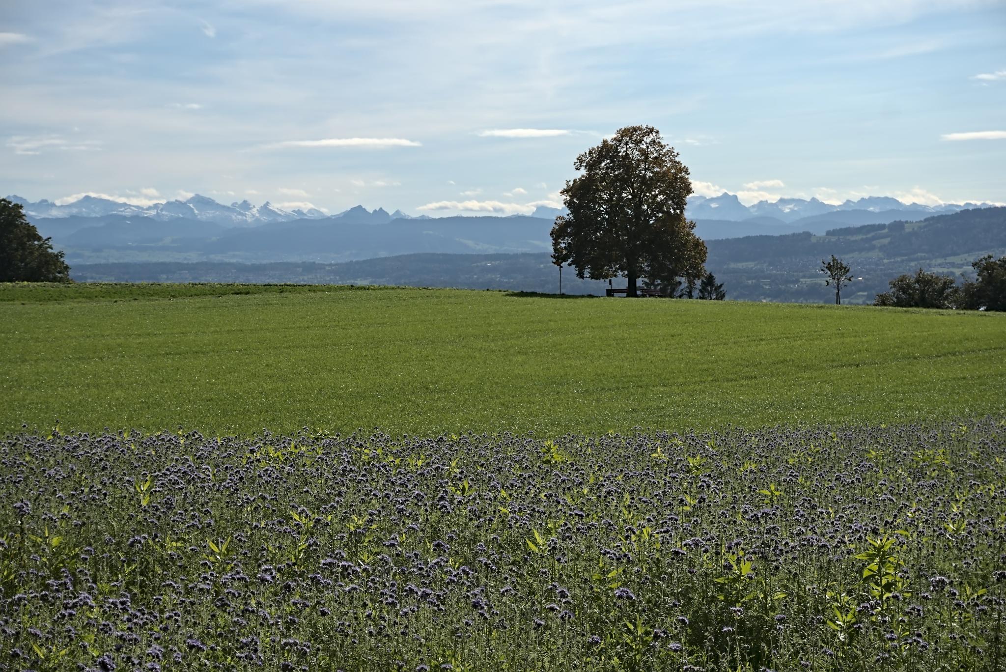 Alpenpanorama Guntenswil