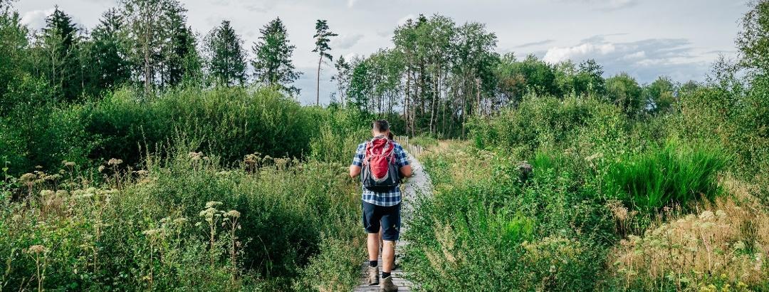 Die Sistig-Krekeler Heide - ein Paradies für seltene Pflanzen und Tiere