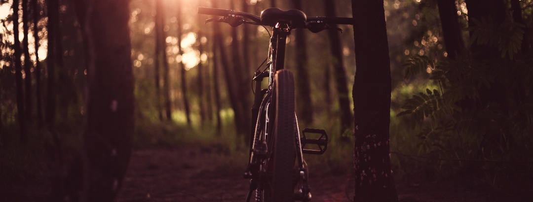 With the mountain bike through the forest