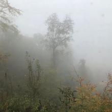 reggeli ködben