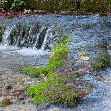 Zufluss zum Kaltentalweiher