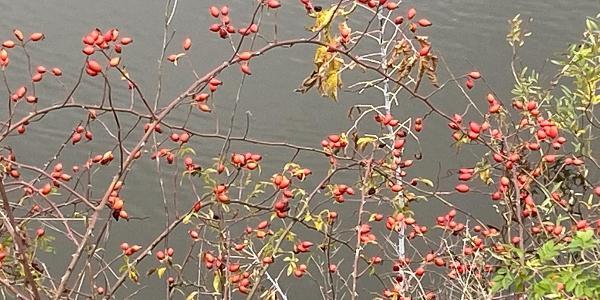 Herbst an der Elbe in Pieschen