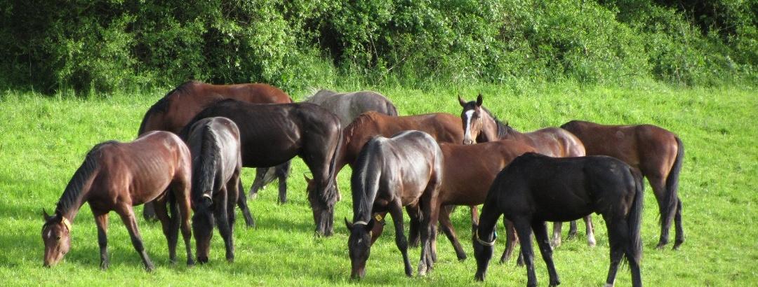 Pferdeweide bei Hunnesrück
