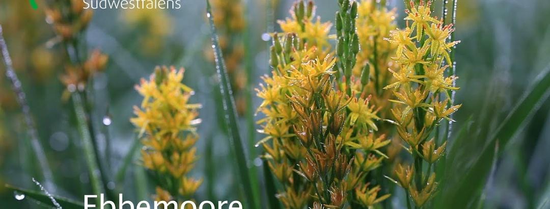 Ebbemoore - Naturschätze Südwestfalens