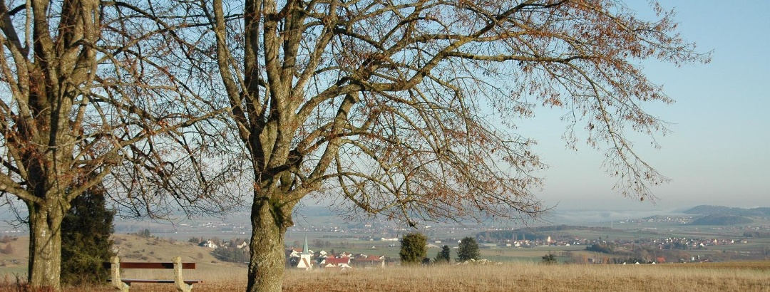Blick vom Albuch auf das Ries
