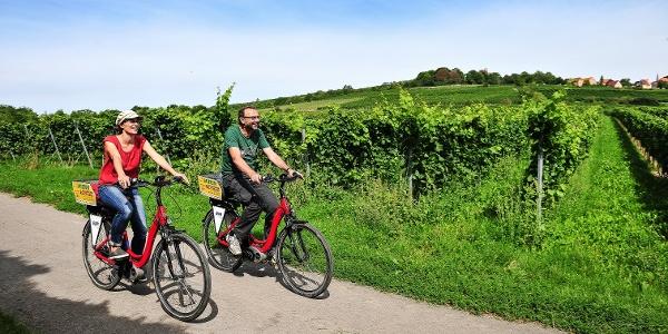 Radfahrer im südlichen Rheinhessen