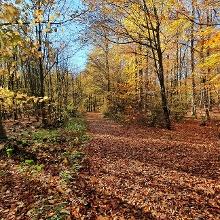 Jetzt geht's los in den Wald hinein bei schöner Herbstsonne