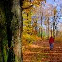 Profilbild von Tourismus VG Lauterecken-Wolfstein
