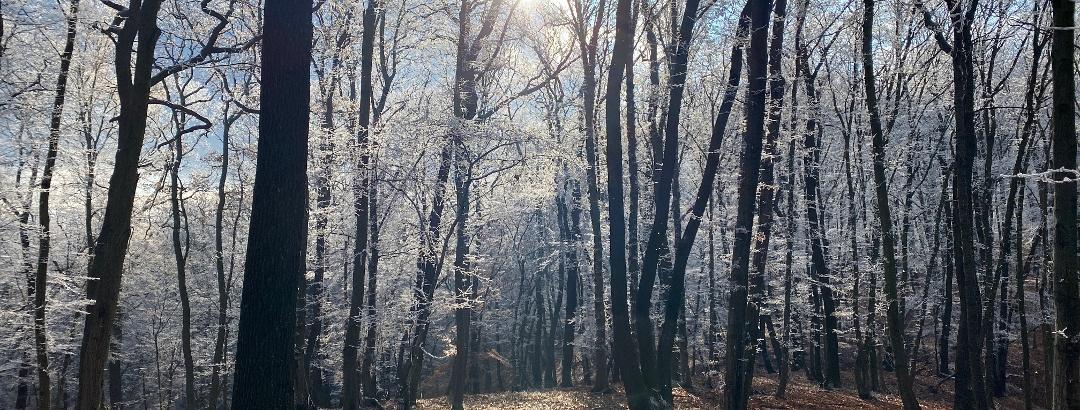 Pădure lângă Mediaș