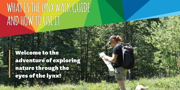 Lynx Walk