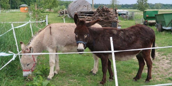 2 Esel in Freckenfeld an der NW-Strecke 4