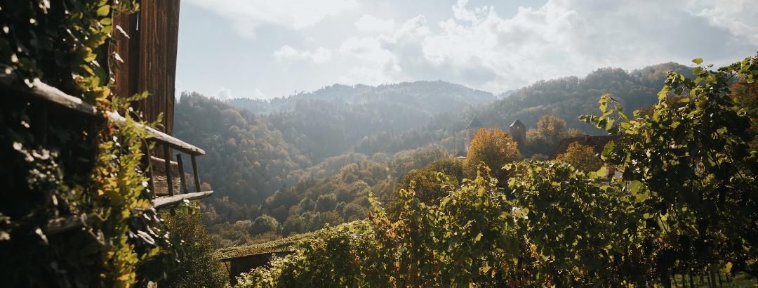 Herbststimmung im Weingarten