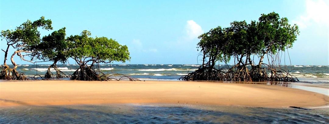 Ilha de Marajó, Pará - Brasil