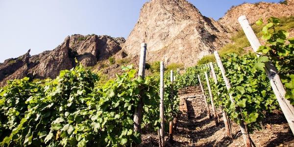 Den Rotenfels von der Weinlage Traiser Bastei aus
