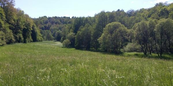 Eschelbachtal bei Ruschberg