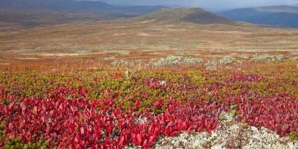 På veg mot toppen kan du se Rypebær.