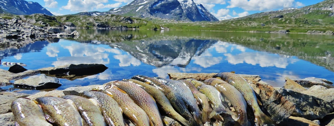 Fint fiske for hele familien i alle vann innover dalene mot Vien.
