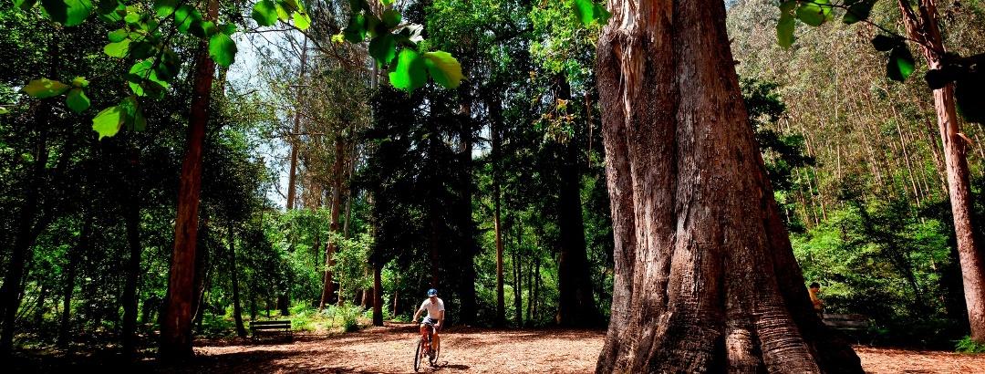 Ciclismo en los bosques de Viveiro, Galicia